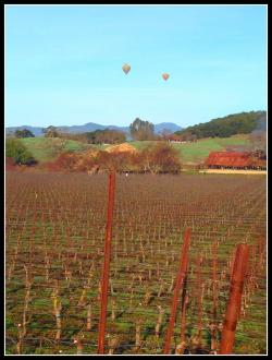 Balloons over Napa Valley Cooking with Julie